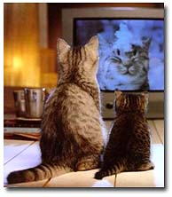 Cat_watching_tv